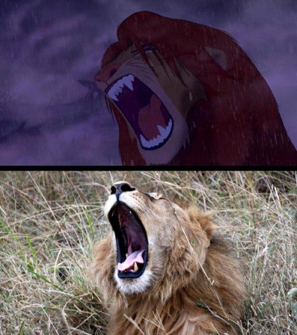Персонажи мультфильма Король лев в реальной жизни (24 фото)