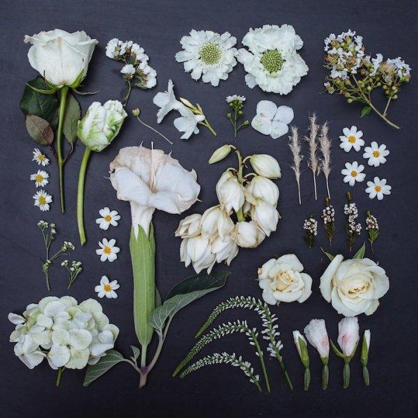 Цветные цветы Эмили Блинко (8 фото)