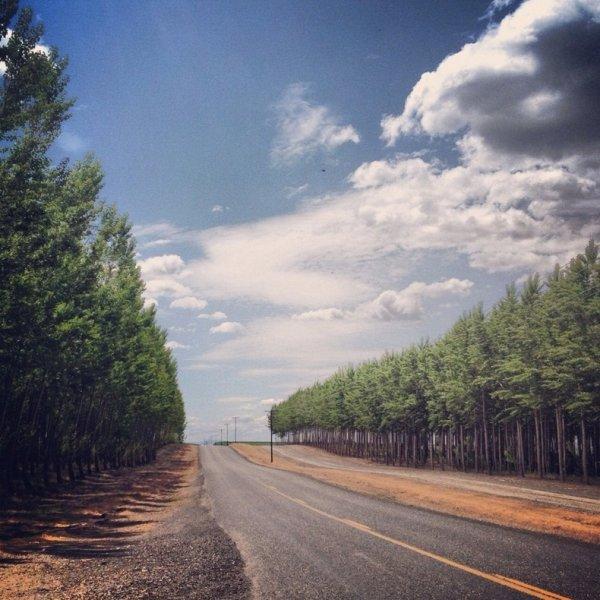 Лесная ферма Бордман в штате Орегон (16 фото)
