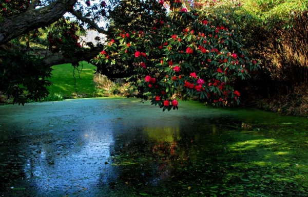Самые живописные сады и парки мира (25 фото)