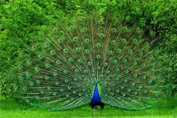 Самые впечатляющие образцы природной симметрии