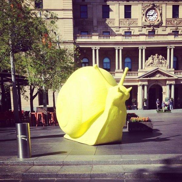 Гигантские улитки на улицах Сиднея (10 фото)