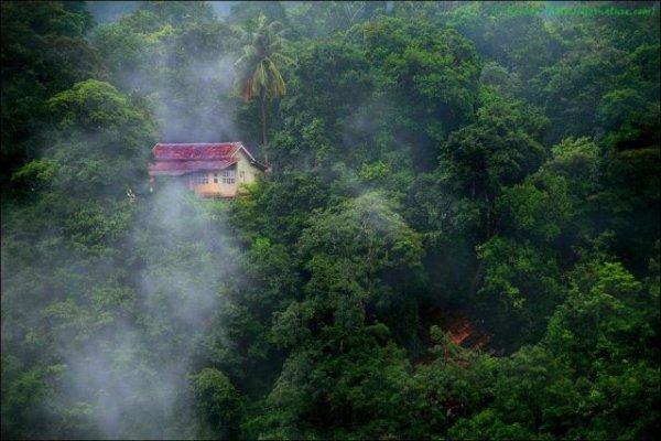 Дома в лесу (19 фото)