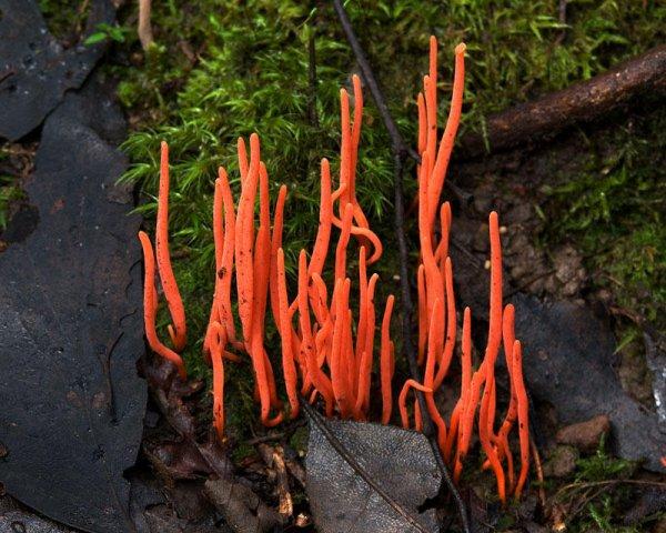 Самые необычные и красивые в природе грибы (15 фото)