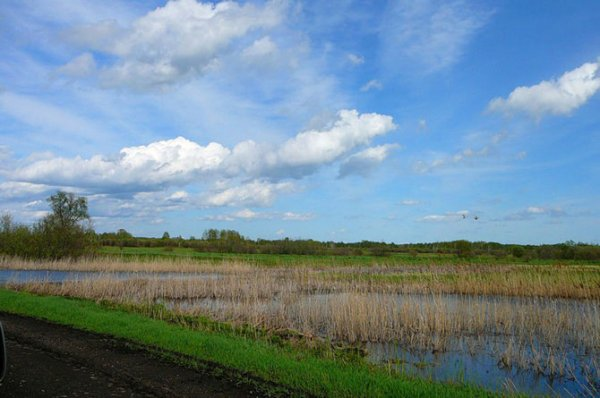 Васюганские болота: гигантский естественный фильтр (7 фото)