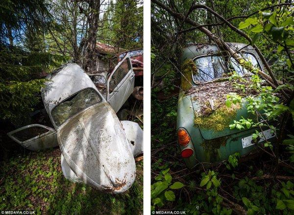 Автомобильное кладбище в шведском лесу (15 фото)