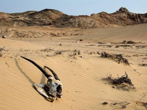 Берег Скелетов в Намибии (29 фото)