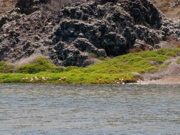Изумрудная чистота озера на острове Рокас Бейнбридж (12 фото)