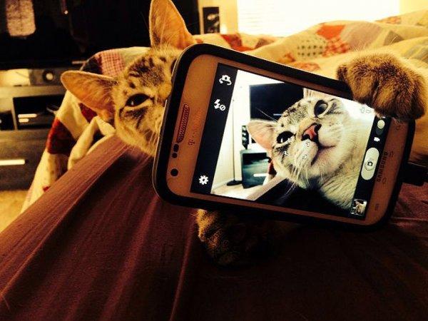 Селфи по-кошачьи (21 фото)
