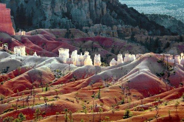 Каньон, где растут гигантские сосны (13 фото)
