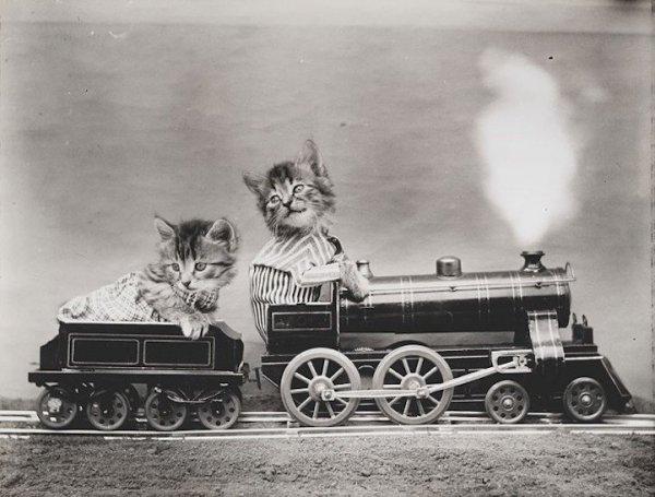 Очаровательные щенки и котята в ретро-снимках Гарри Уиттера Фриса (12 фото)