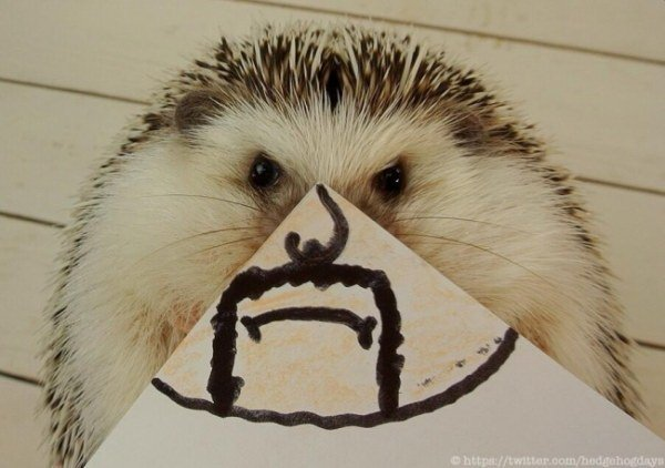 Марутаро – самый популярный ёжик в Twitter (15 фото)