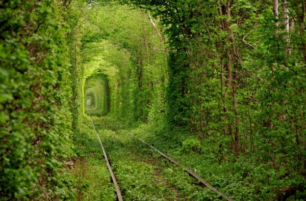 Самые живописные тоннели мира (16 фото)