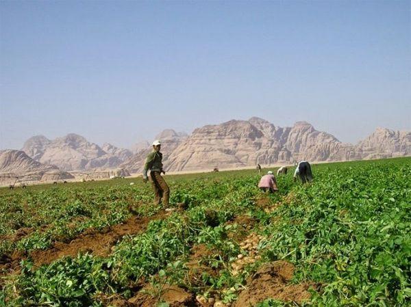Rum Farm: ферма в иорданской пустыне (7 фото)