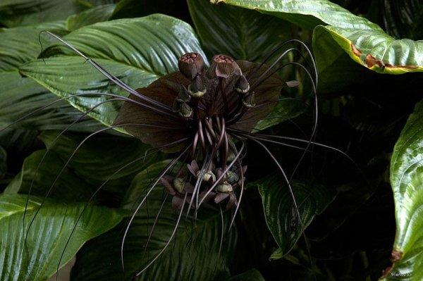 12 Самых жутких растений планеты (55 фото)