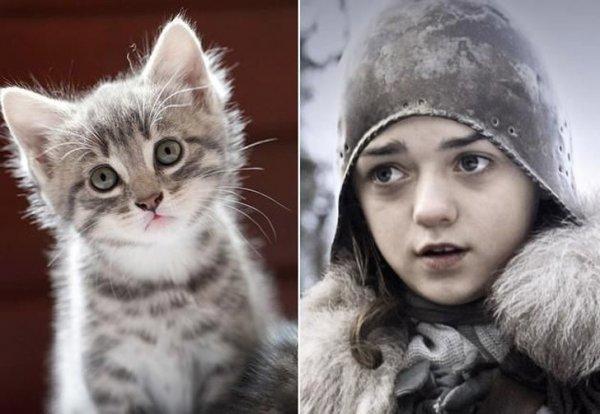 Коты Престолов (18 фото)