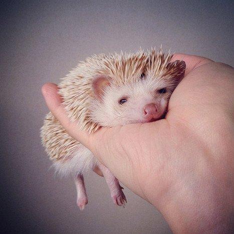 Самые популярные животные в Instagram (10 фото)