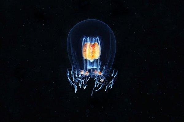 Подводные обитатели в фотографиях Александра Семёнова (22 фото)