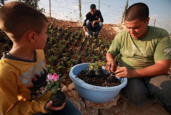 Женщина из Палестины посадила цветы в гранатах со слезоточивым газом израильской армии (10 фото)