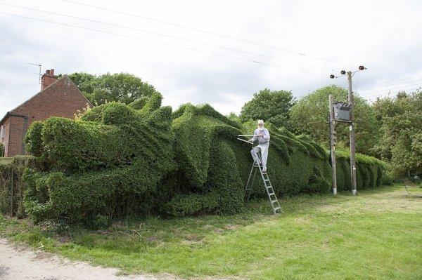 45-метровый дракон из живой изгороди (5 фото)