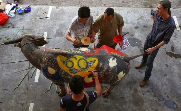 Соревнования по декоративной росписи буйволов в Китае (9 фото)