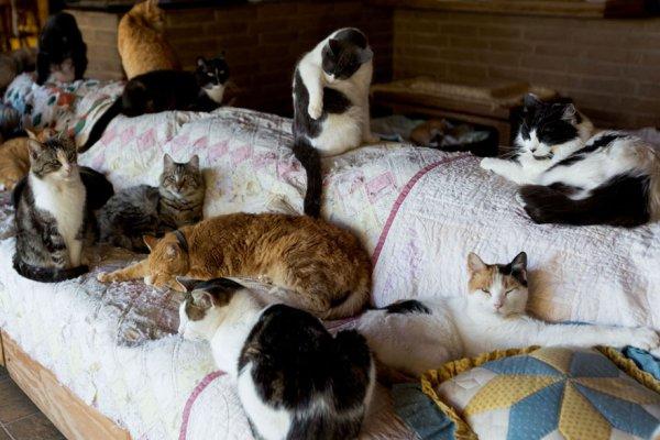 The Cat House on the Kings  - самый крупный в мире приют для кошек (22 фото)