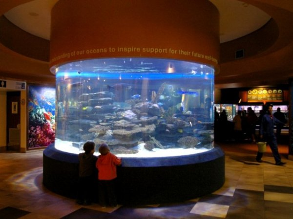 Топ-10: Самые  крупные и поразительные аквариумы в мире