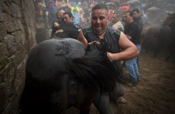Массовое подстригание лошадей на фестивале Rapa das Bestas (15 фото)