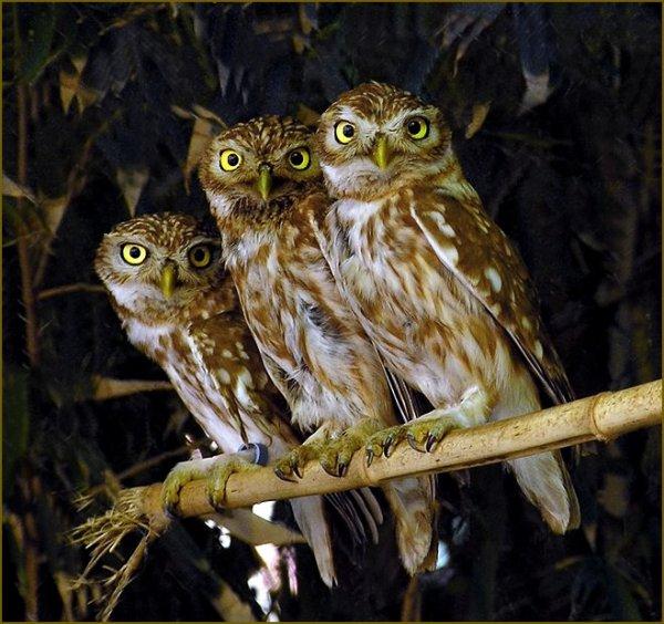 Очаровательные троицы (31 фото)