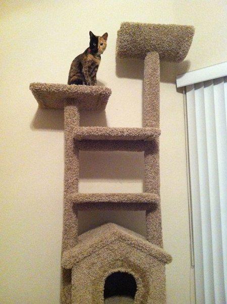 Знаменитая кошка-химера по кличке Венера (18 фото + видео)