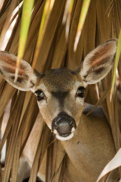 Девятый ежегодный фотоконкурс Палм Бич Пост под названием «Фокус на природу» (25 фото)