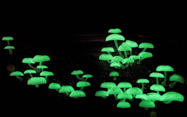 Царство грибов через объектив Стива Эксфорда (15 фото)