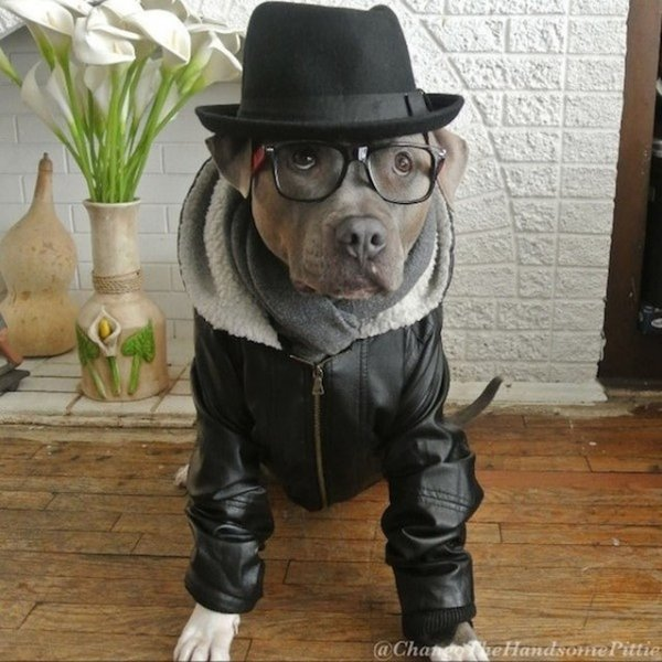 Самые красивые собаки Интернета (10 фото)