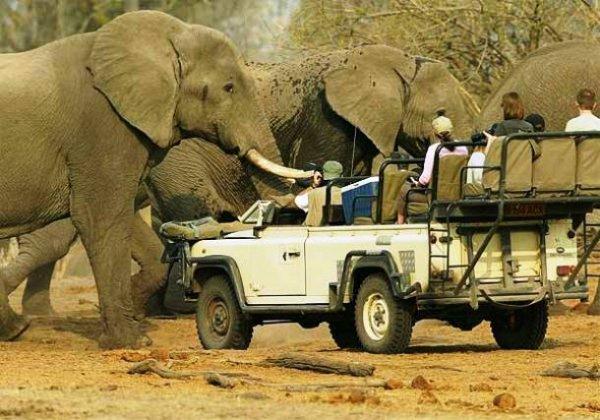Топ-25 потрясающих африканских национальных парков, которые стоит посетить