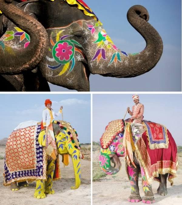 10 Противоречивых произведений искусства, в которых животные используются в качестве холста