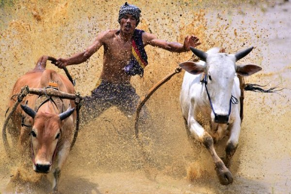 Конкурс фотографии 2014 года от National Geographic (23 фото)