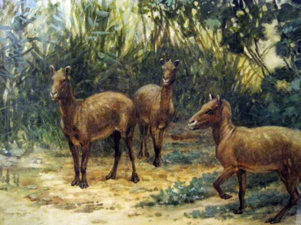 Топ-10 ранее крутых существ, которых испортила эволюция