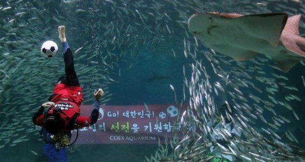 Подводный футбол в сеульском аквариуме COEX (7 фото + видео)