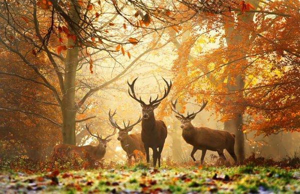 Дикие животные осенью (16 фото)