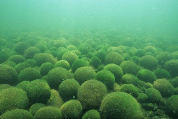 Шары мха на озёрах Миватн и Акан (10 фото)