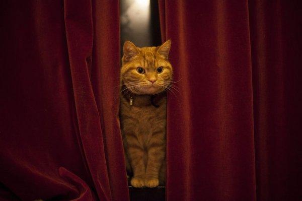 Зевающий кот Люччи (12 фото)