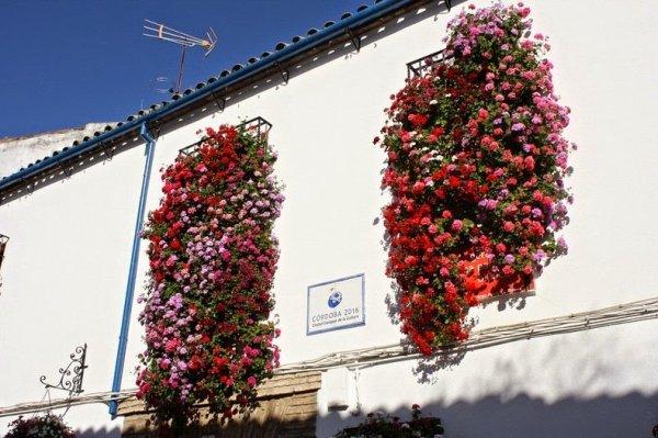 Цветочные фестивали в Кордове (12 фото)