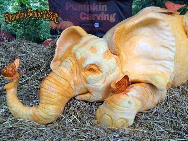 Статуи из тыквы в память о слонах, убитых браконьерами (16 фото)