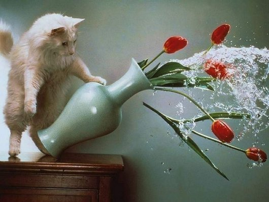 Прикольные картинки с котиками и кошечками (14 шт)