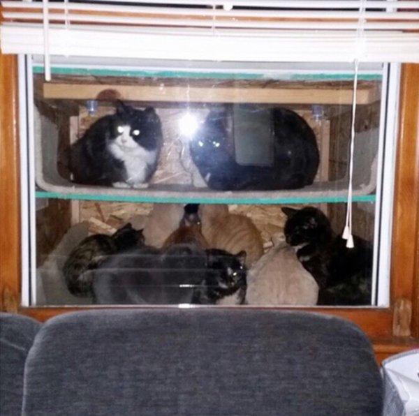 «Котариум» для бездомных кошек (3 фото)