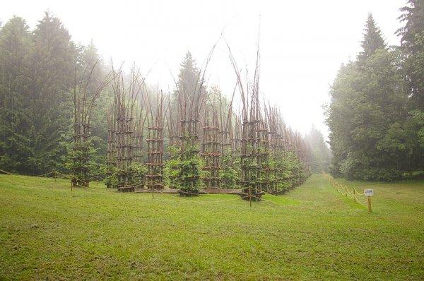 Величественный собор, созданный из живых деревьев (13 фото)
