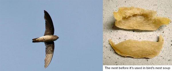 Топ-25: Невероятные примеры сооружений, возведённых животными