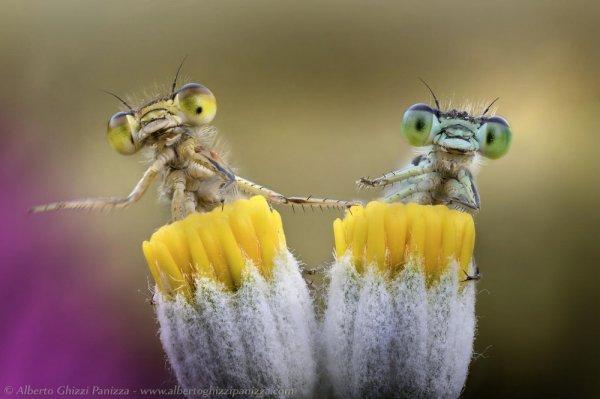 Потрясающие макрофотографии (19 шт)