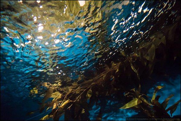 Лиссабонский океанариум в фотографиях (16 фото)