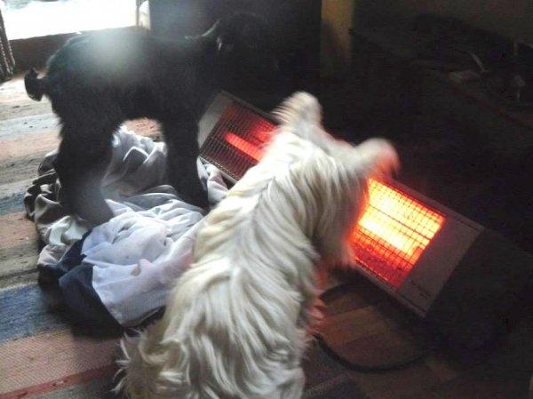 Джувела оставили умирать на холоде, но эти люди не могли этого допустить (15 фото)